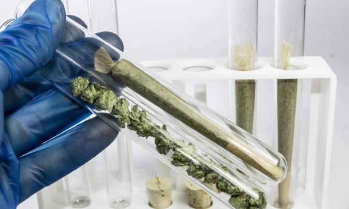 cannabis in Maryland Medical